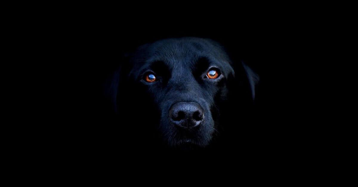 Stop Makan Daging Anjing Dengan Sayur Kol